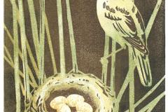 Reed Warbler's nest